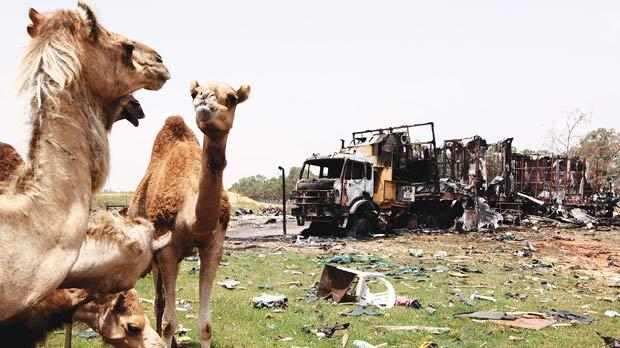 This picture, taken on a guided government tour yesterday, showing camels in the area that the Libyan government says was hit by Nato airstrikes the day before at a wilderness park on the outskirts of Tripoli. Photo: AFP